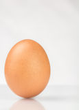 Brown chicken egg Stock Photos