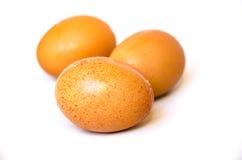 Brown chicken egg Royalty Free Stock Photos