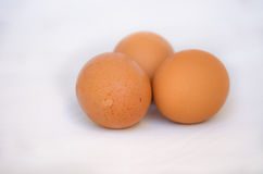 Brown chicken egg Royalty Free Stock Photo
