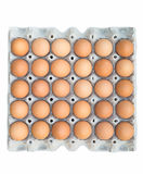 Brown chicken egg Stock Images