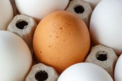 Brown chicken egg among white eggs in cardboard tray closeup Stock Images