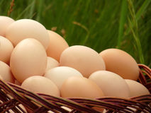 Brown chicken egg in a wicker basket Royalty Free Stock Photography