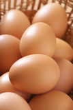 Brown chicken eggs Royalty Free Stock Photography