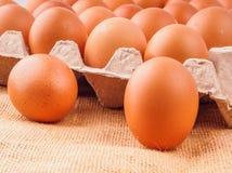 brown chicken eggs in carton Stock Photography