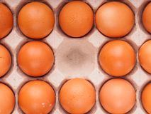 brown chicken eggs in carton Royalty Free Stock Images