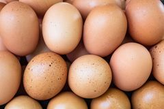 Brown chicken eggs close up in farm stock image