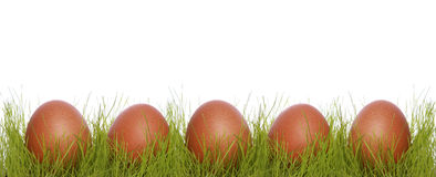 Brown chicken eggs in a grass Royalty Free Stock Photography