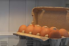 Brown chicken eggs in a gray cardboard container. Chicken brown eggs in a cardboard container on the shelf of the refrigerator Stock Photography