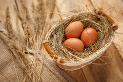 Brown chicken eggs Royalty Free Stock Images