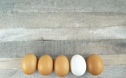 Brown chicken eggs and one white one at wooden background royalty free stock images