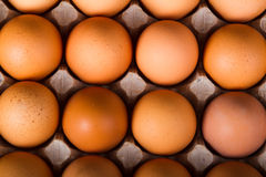 Brown chicken eggs Stock Photography