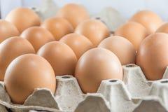 Brown chicken eggs in paper carton box stock photo