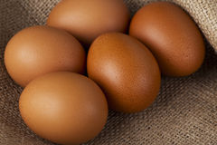 The brown chicken eggs Stock Photo