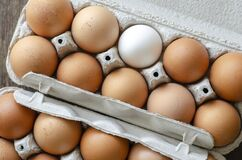 Brown chicken eggs in the trays
