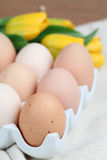 Brown chicken eggs and tulips Royalty Free Stock Images