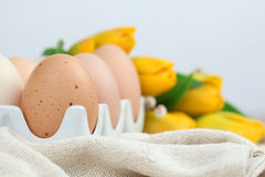 Brown chicken eggs and tulips Stock Photo