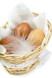 Brown chicken eggs with white feather in a basket on a white Royalty Free Stock Photos