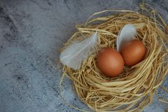 Brown chicken eggs with white feathers in hay nest on light concrete. closeup of farm eggs. horizontal view of raw chicken eggs. royalty free stock photography