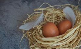 Brown chicken eggs with white feathers in hay nest on light concrete. closeup of farm eggs. horizontal view of raw chicken eggs. stock photography