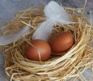 Brown chicken eggs with white feathers in hay nest on light concrete. closeup of farm eggs. horizontal view of raw chicken eggs. royalty free stock photos