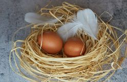 Brown chicken eggs with white feathers in hay nest on light concrete. closeup of farm eggs. horizontal view of raw chicken eggs. stock image