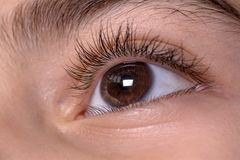 Brown child`s eyes. Macro shot of Beautiful brown Child`s eyes , looking top royalty free stock photography