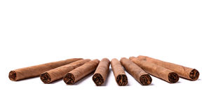 Brown cigar burned on white background Stock Image
