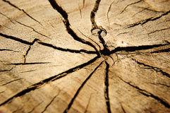 Brown circular cross section of tree Royalty Free Stock Photo