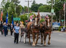 Brown Clydesdale horses pull wagon at parade in USA Royalty Free Stock Photo
