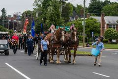 Brown Clydesdale horses pull wagon at parade in USA Stock Photography
