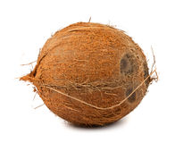 Brown coconut Stock Images