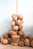 Brown coconut bunch in vertical view Stock Photography