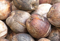 Brown Coconut Royalty Free Stock Images