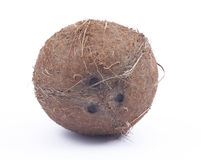 Brown coconut on white background. Brown hairy coconut on white background Stock Image