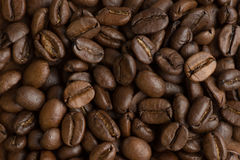 Brown coffee beans, closeup of macro for background and texture Royalty Free Stock Images
