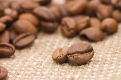 Brown coffee grains on a sacking Stock Images