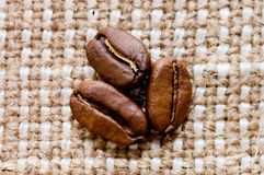 Brown coffee grains on a sacking Stock Photos