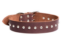 Brown collar. With rivets isolated over white background royalty free stock photos