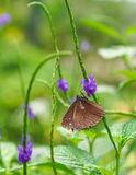 Brown color butterfly in a garden Royalty Free Stock Photos