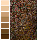 Brown color complimentary chart Stock Photography