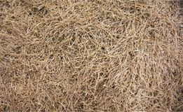 The brown color dry grass royalty free stock photos