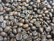 Brown colored coffee bean Royalty Free Stock Photography