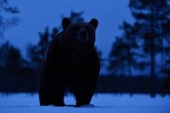 Brown concernent la neige tard la nuit Images libres de droits