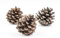 Brown cones on white background Stock Photos