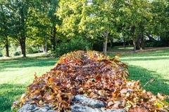 Brown copre di foglie su una parete della pietra a Chemnitz immagine stock libera da diritti
