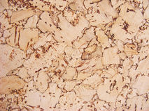 Brown cork background surface Stock Photos