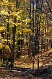Brown County delstatspark Royaltyfri Bild