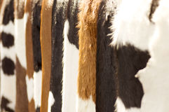 Brown cow fur background. Photo for a design Royalty Free Stock Photos