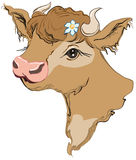 Brown cow head with a flower in her hair. Side view Royalty Free Stock Image