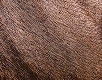 Brown cowhide wool Royalty Free Stock Photos